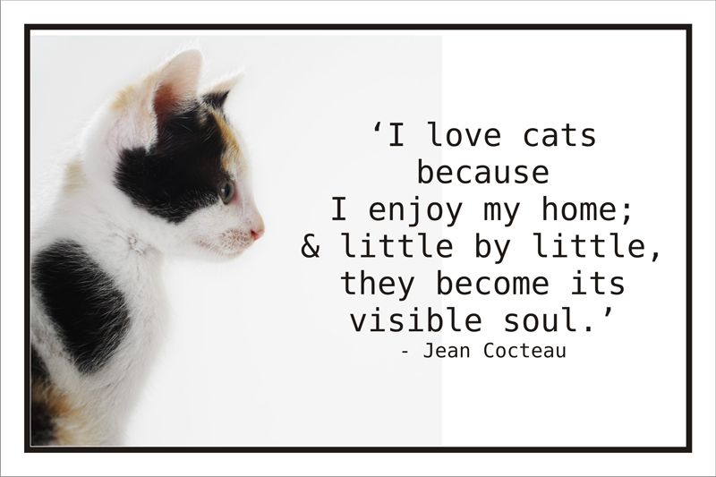 Quotes About Cats Cat Quotessayings