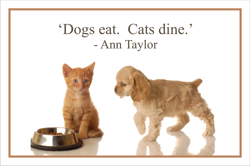 Cat Quotes Sayings