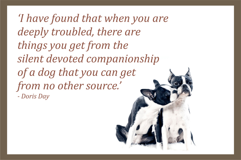 Dog quotes sayings for Best dogs for companionship